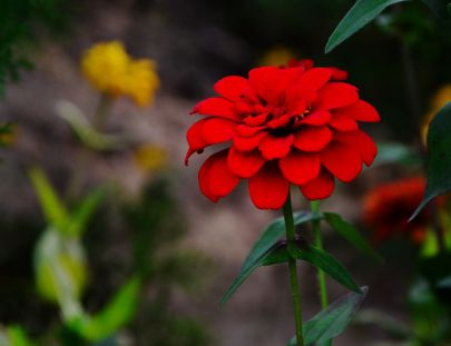 府谷掠影-一些花草