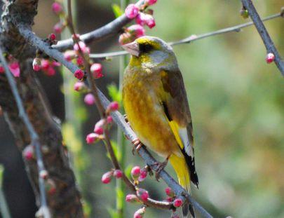 府谷掠影-在府谷能看到的鸟